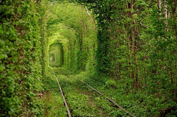 Beautiful-Train-Tree-Tunnel_2